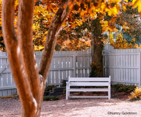 Color photo, park bench during the fall season.