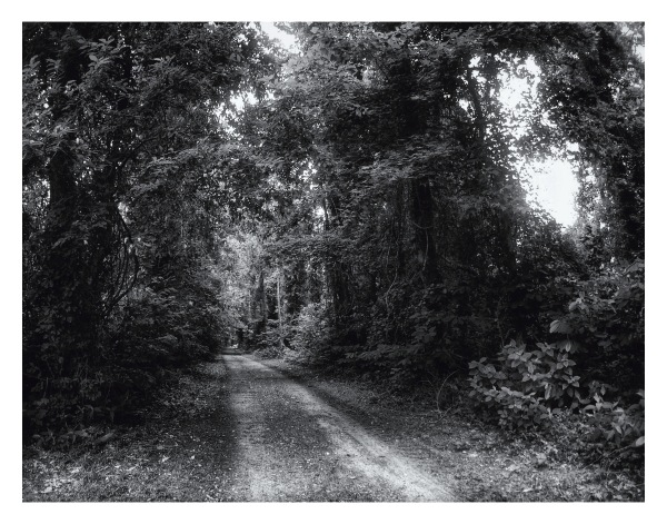 B/W photo, Canal Road, Dismal Swamp State Park