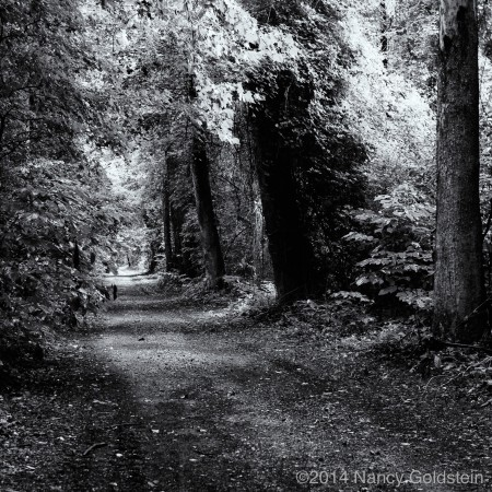 B/W image of forest road